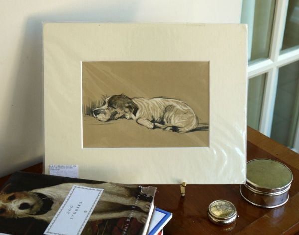 Little Terrier - asleep on his tummy 1930's print by Lucy Dawson - Ter D14